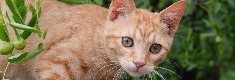 Katze aufmerksam