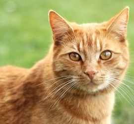 Katze Mimik Augen Ohren Schnurrhaare