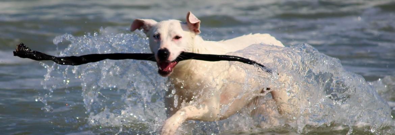 Therapien Tierheilpraktikerin - Hund im Wasser