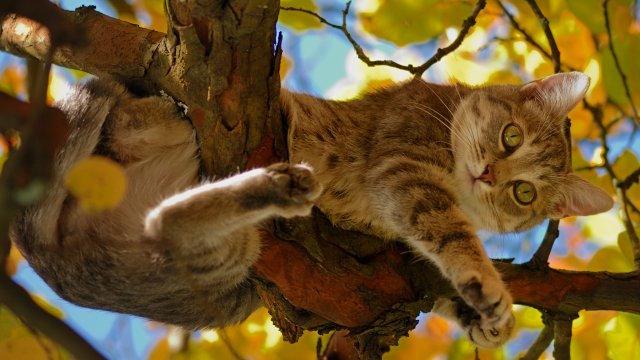 Startseite Tierheilpraktikerin mit Katze