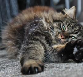 Katze entspannt
