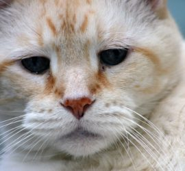 Katze Unsauberkeit