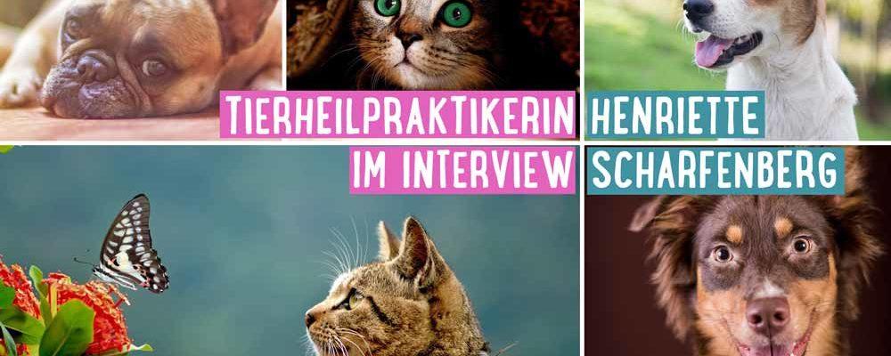 interview_tierheilpraktikerin