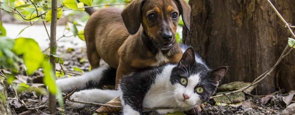 Hund und Katze - Kastration