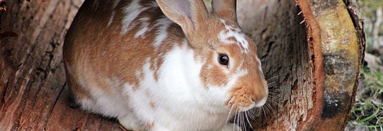 Kaninchenhaltung - Elemente