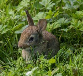Kaninchen Kräuterwiese