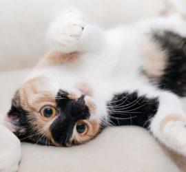 Katze rollt auf dem Boden