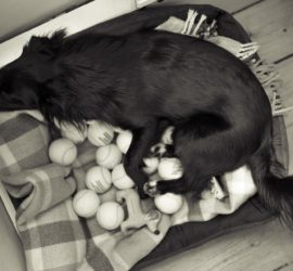 Scheinträchtigkeit - Nest