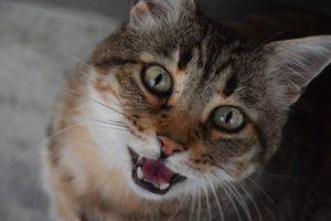 Katze Lautäußerung